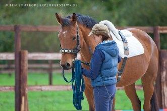 Pferdeausbildung Ausbinder