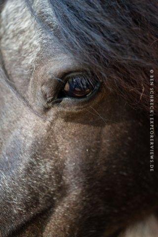 Pony Auge