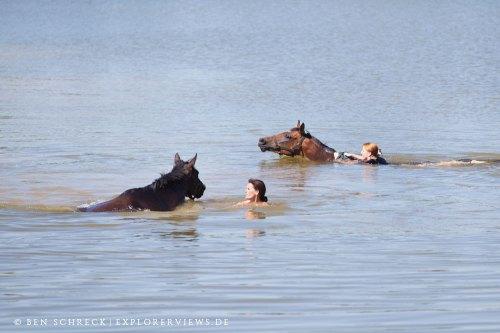 Swim with Horses