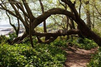 Insel Hebihens Wald