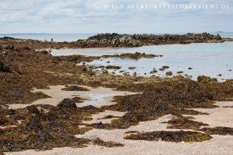 Meeresgrund bei Ebbe Verdelet