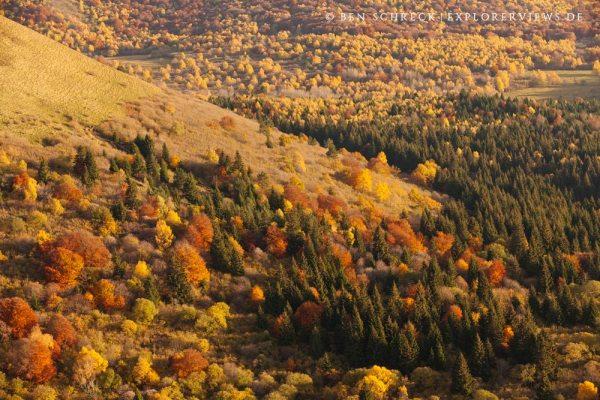 Herbstwald Auvergne Puy de Dome Autumn 8760