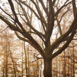Baum im Nebel Auvergne 4966