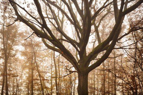 Baum im Nebel Auvergne