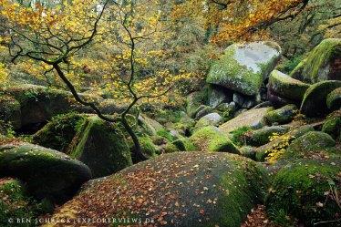 Bretonischer Wald Argoat