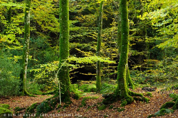 Herbst Wald Bretagne