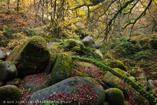 Wild Forest Brittany