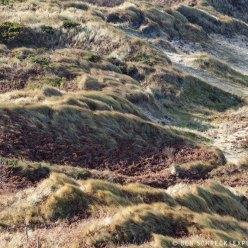 Dünenlandschaft Bretagne 4643