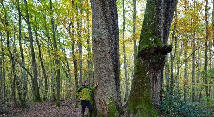 Fotograf im Wald