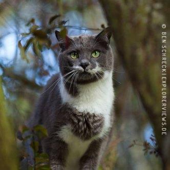 Katzen Fotos im Baum