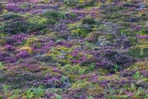 Heide Teppich 2