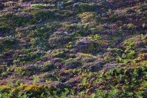 Heide Wand