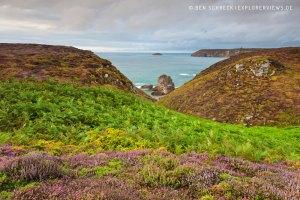 Heidelandschaft am Meer