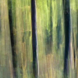 Wald ICM