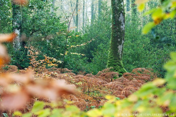 Blätter im Wald zur Herbstzeit 9297