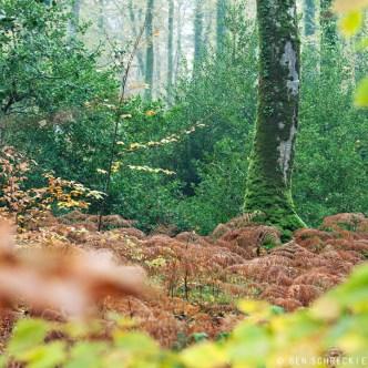 Blätter im Wald zur Herbstzeit