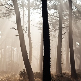 Cap Erquy Nebel 7640
