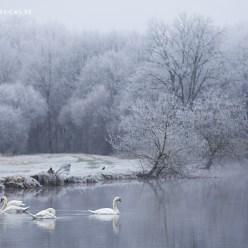 Winter in der Bretagne Schwanen See 7996
