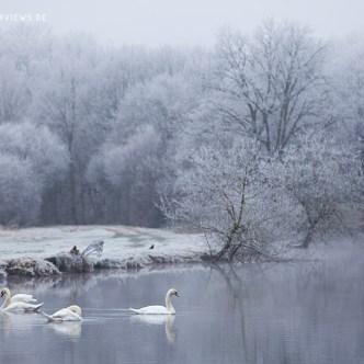 Winter in der Bretagne Schwanen See