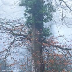 Baum im Nebelwald 0052
