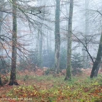 Normandie Wald Cerisy