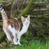 Bunte Katze im Garten