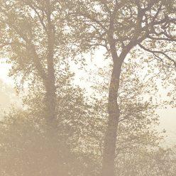Bäume im Nebel Frühling