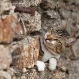 Getigerte Katze auf der Lauer