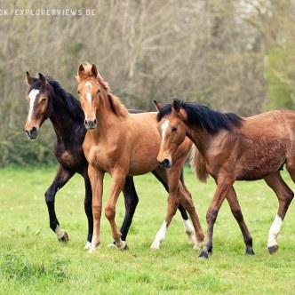 Pferde Truppe