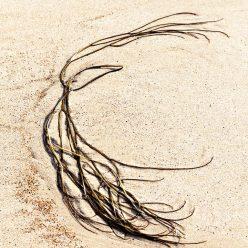 Algen am Strand abstrakt