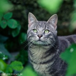 Katze im Dschungel