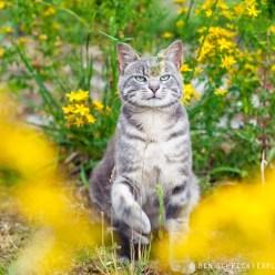 Spielende Katze im Blumenfeld 4153