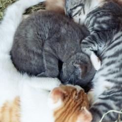 Katzen im Heu Yin Yang 7629