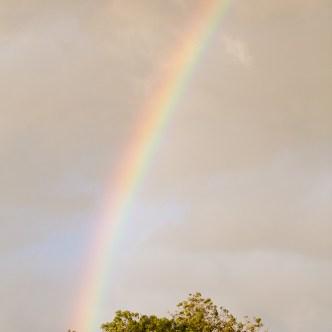 Regenbogen 6366