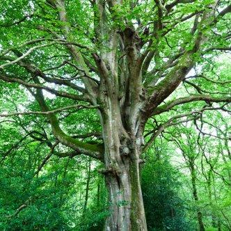Baum Riese 5403