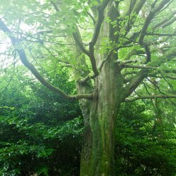 Cotentin Wald 5498