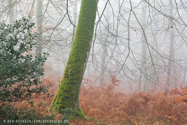 Nebel im Winterwald 0216