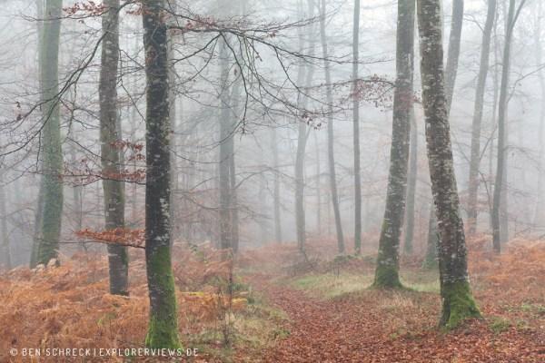 Pfad durch den Nebelwald 0246