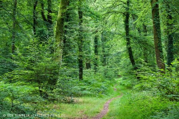 Waldweg durch den grünen Wald 5331