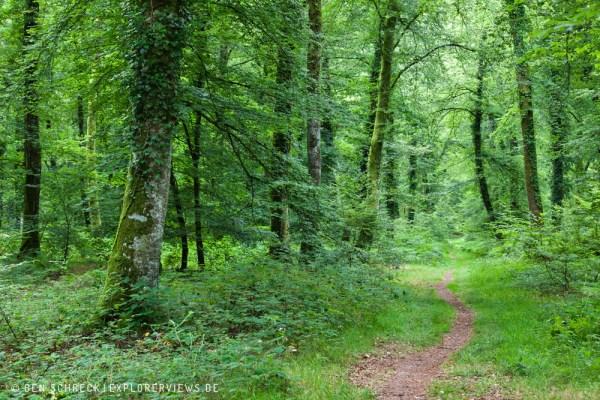 Weg durch den Sommerwald