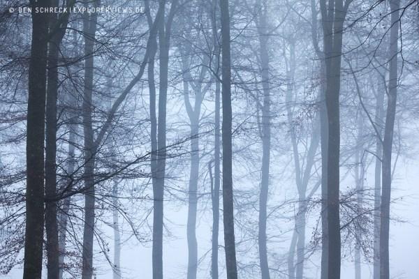 Buchenwald im Nebel 0015