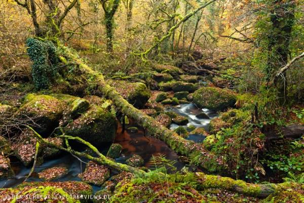Geheimnisvoller Wald 9720