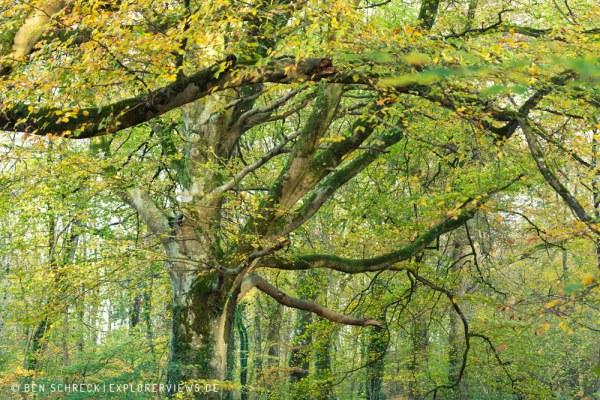 Herbst Stimmung Normandie 9238