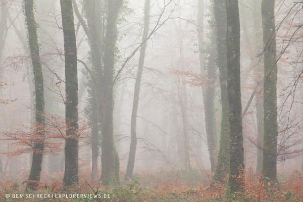 Magischer Nebelwald 0156