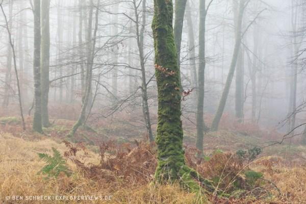 nebliger Wald 0228