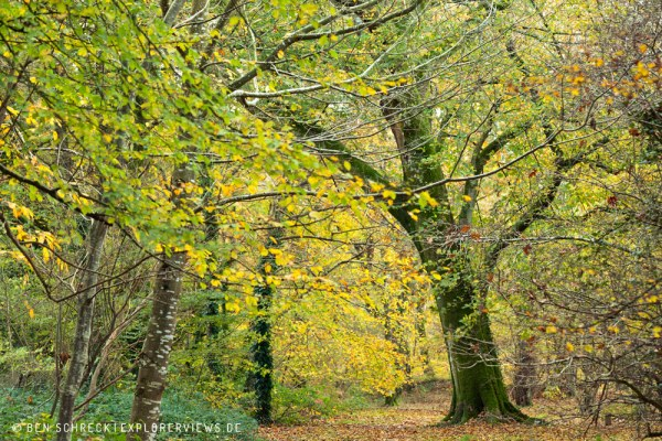 Normandie Herbstwald 9230
