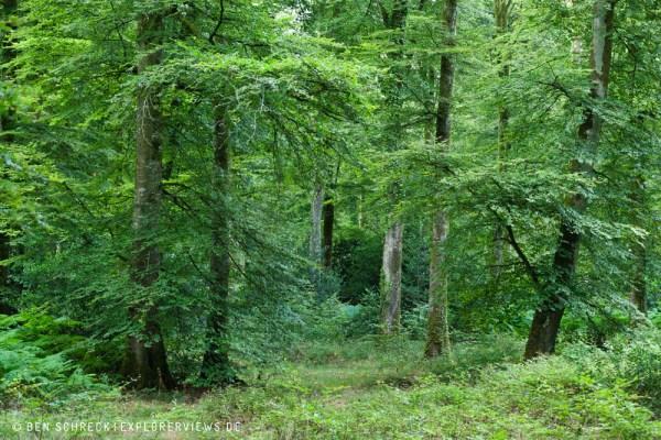 Wald im Sommer 5750