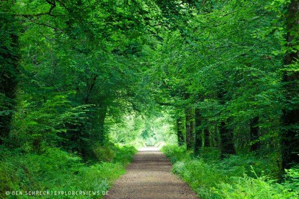 Waldweg Normandie 5543