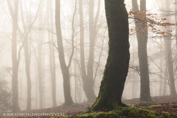 mystischer Nebelwald 3334