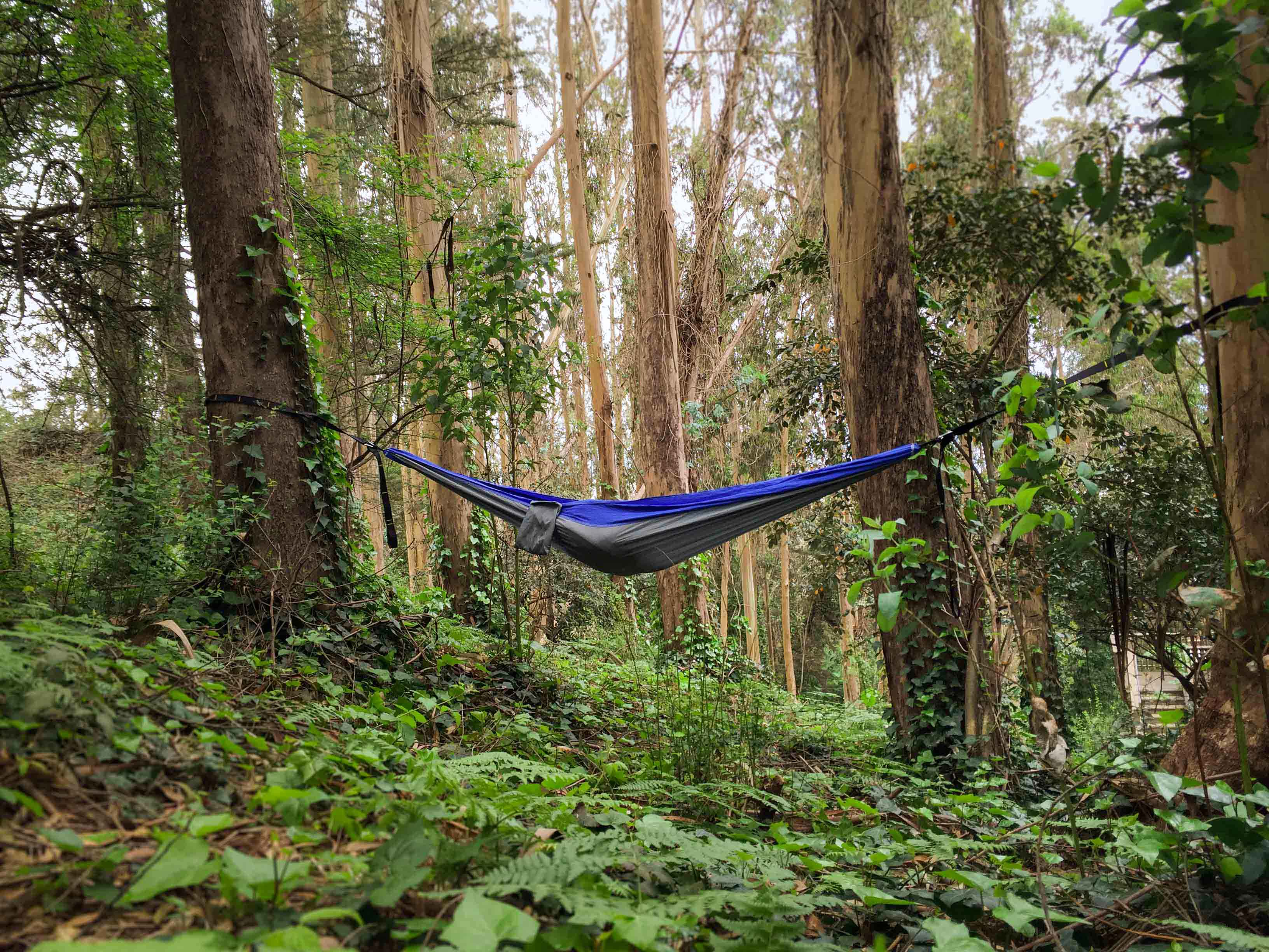 forest hammock camping